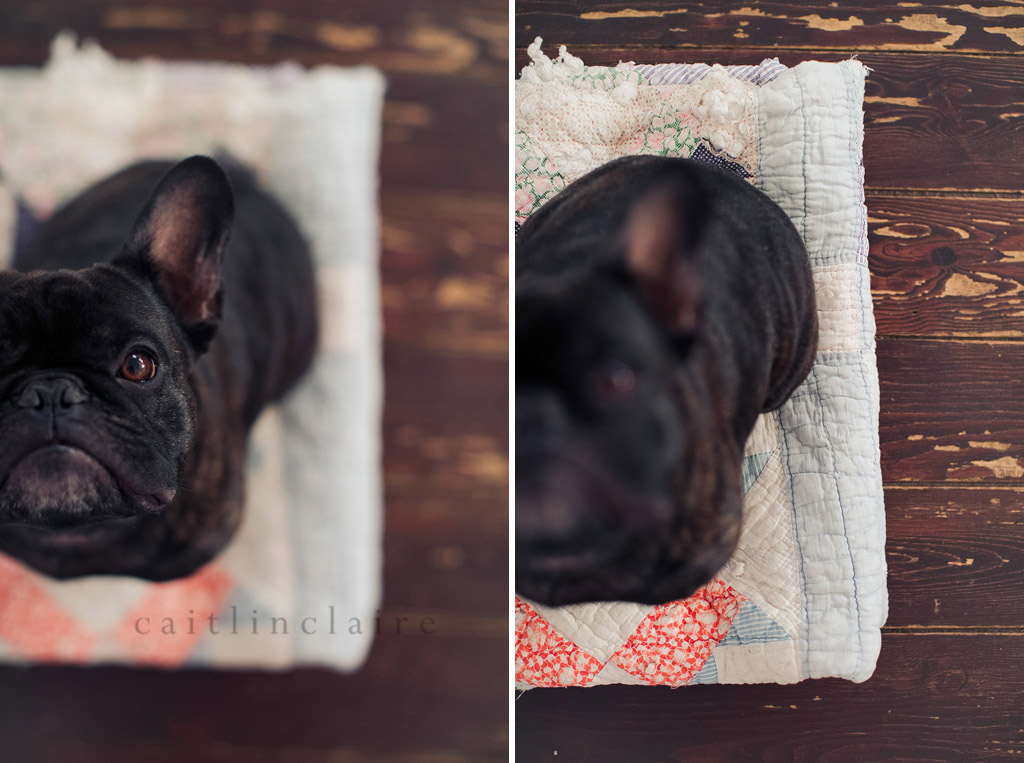 Caitlin_Claire_Studio_Photography_French_Bulldog_01