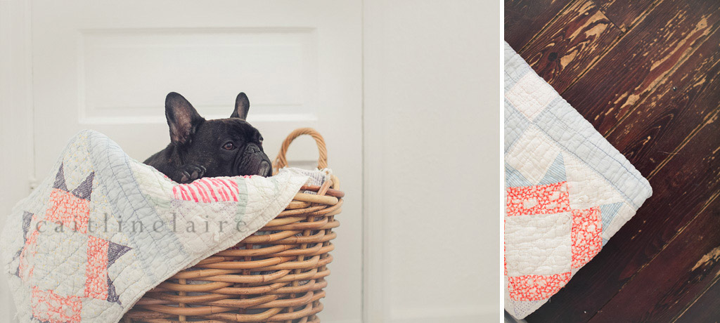 Caitlin_Claire_Studio_Photography_French_Bulldog_02