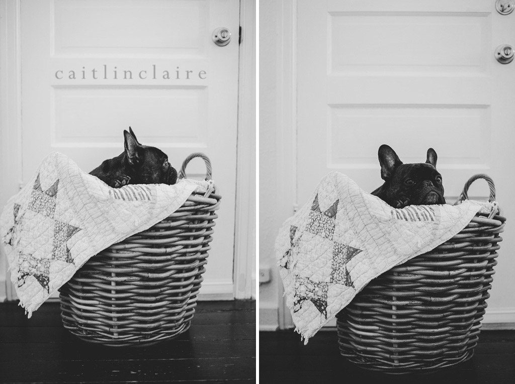 Caitlin_Claire_Studio_Photography_French_Bulldog_03, Pet Photography
