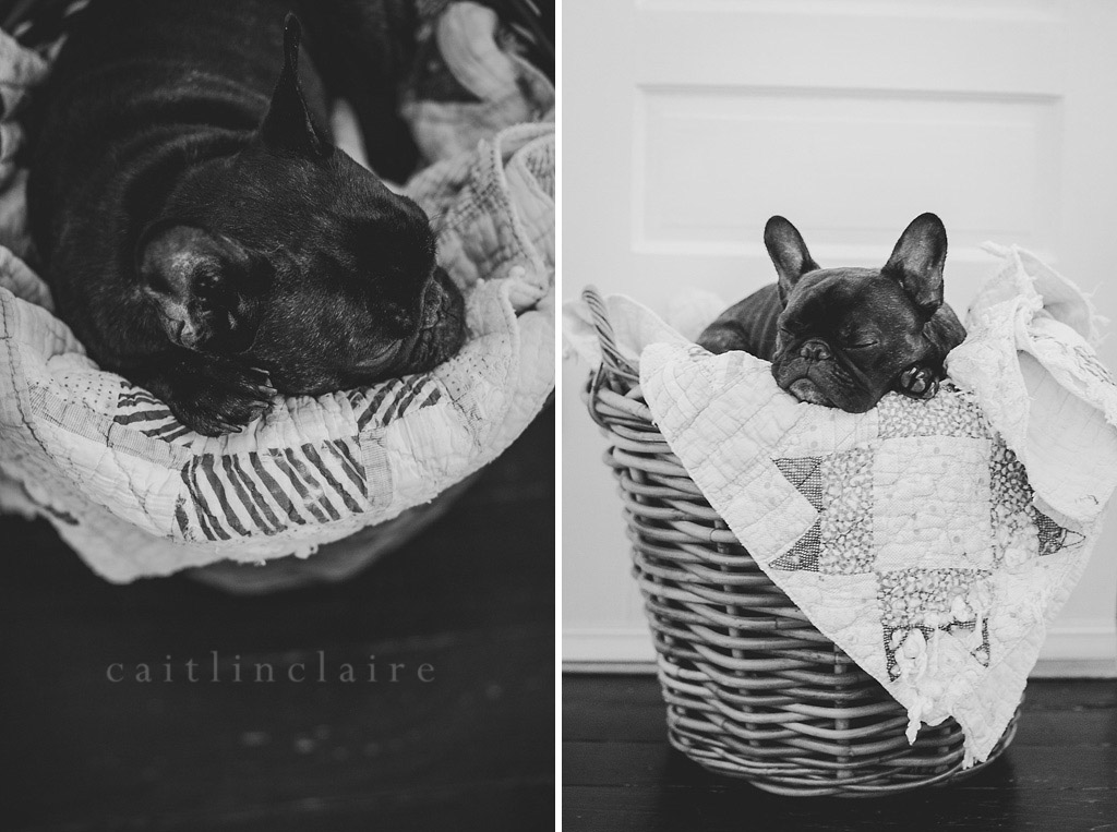 Caitlin_Claire_Studio_Photography_French_Bulldog_05