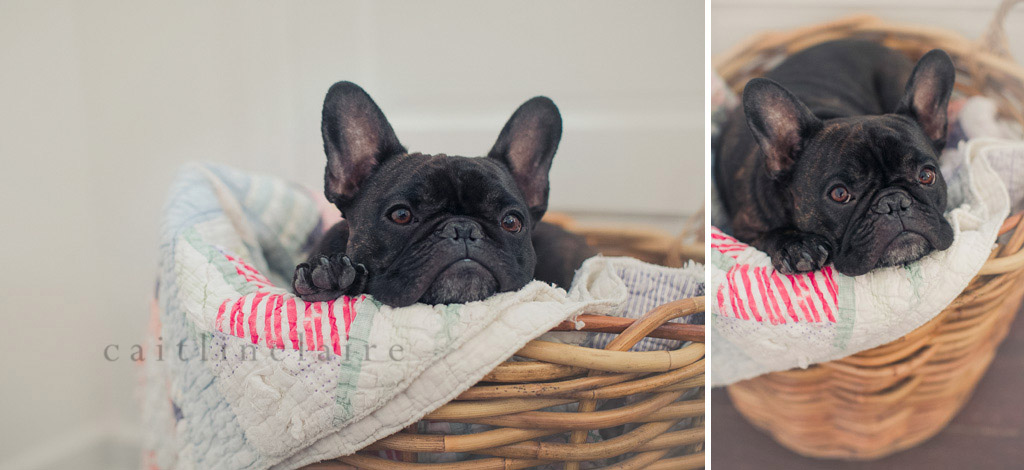 Caitlin_Claire_Studio_Photography_French_Bulldog_06
