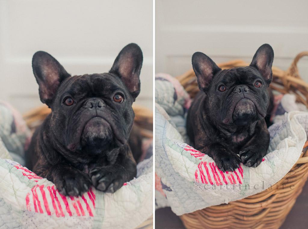 Caitlin_Claire_Studio_Photography_French_Bulldog_07