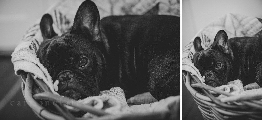 Caitlin_Claire_Studio_Photography_French_Bulldog_09