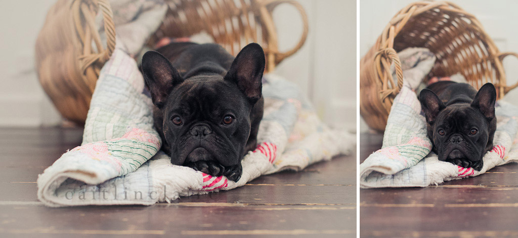 Caitlin_Claire_Studio_Photography_French_Bulldog_11