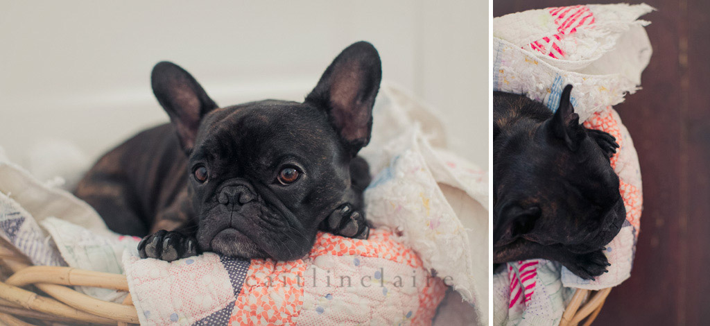 Caitlin_Claire_Studio_Photography_French_Bulldog_16